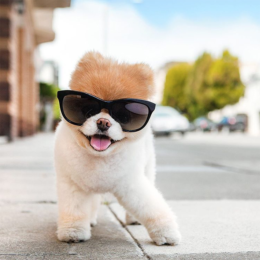 Boo Dog Star Of The Web Love Ferplast