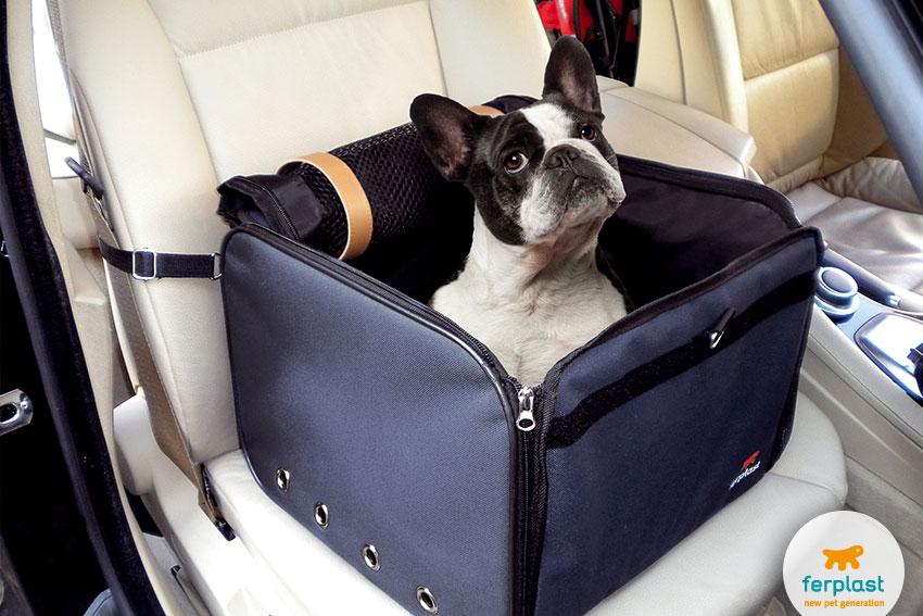 perros_del_apartamento_bulldog_francés_portador_de_coche