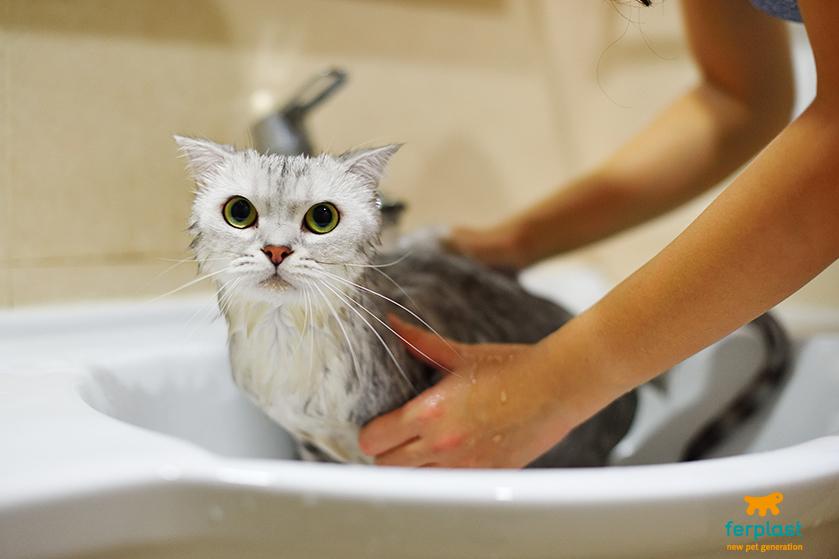 come_far_superare_paura_dell_acqua_al_gatto