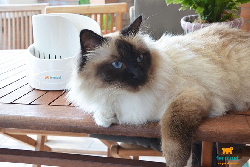 Quanta água um gato bebe por dia
