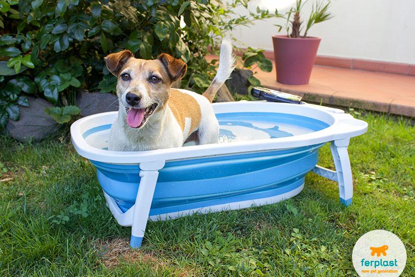 Como dar banho no cachorro em casa