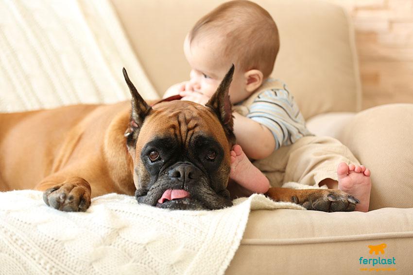 il cane abbaia al bambino accettare la novità