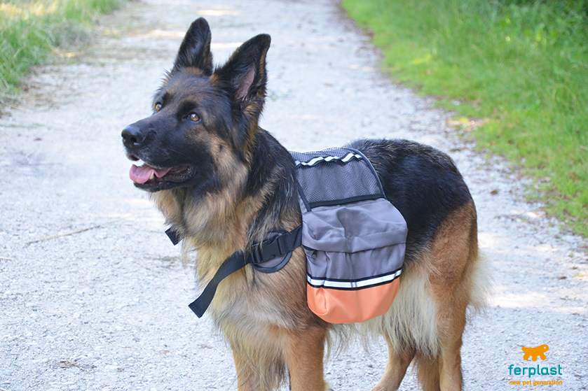 pastore_tedesco_camminata_in_montagna