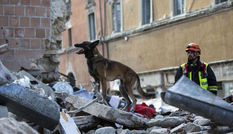 terremoto agosto 2016 accumoli amatrice cani eroi