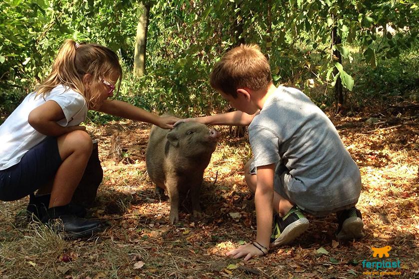 bambini_e_animali_fattoria_didattica_bassano_del_grappa