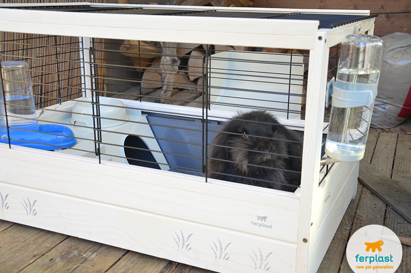 Quanto pu stare solo un coniglio love ferplast for Conigliera da interno
