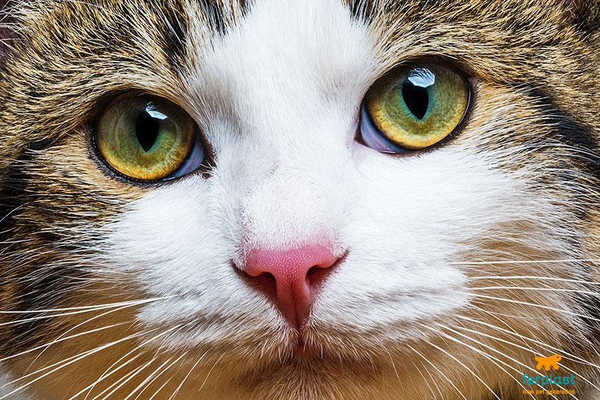 occhi del gatto curiosità