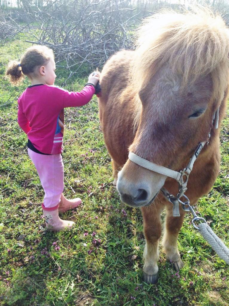 pony_biofarm_marina_fattoria