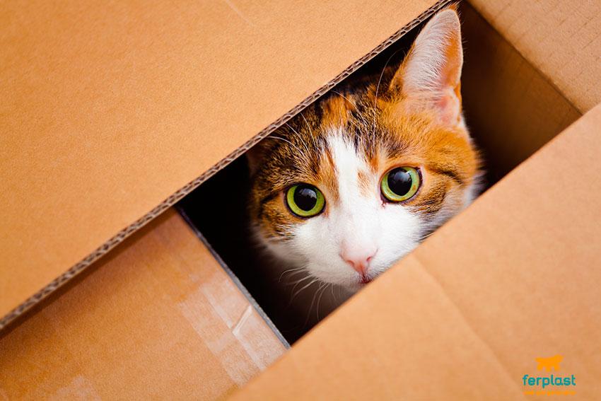 traslocare col gatto