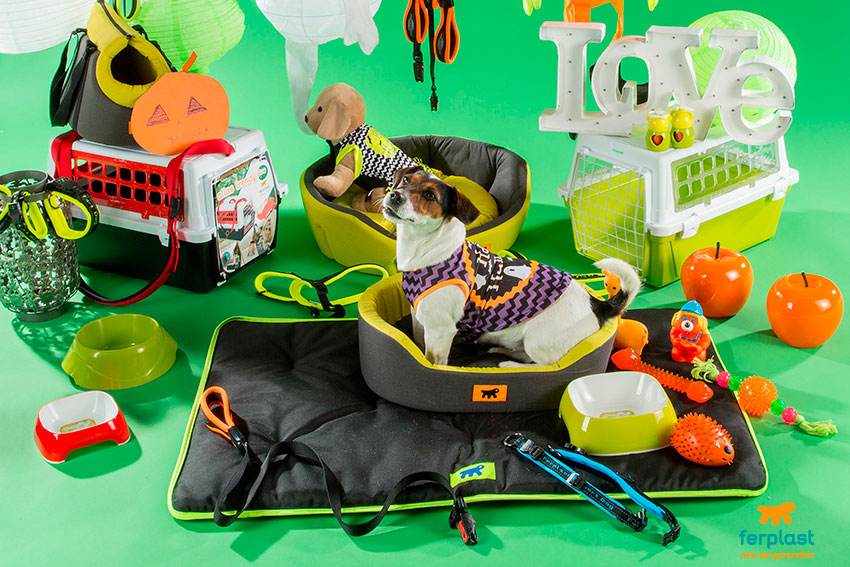 cani e halloween costumi e accessori