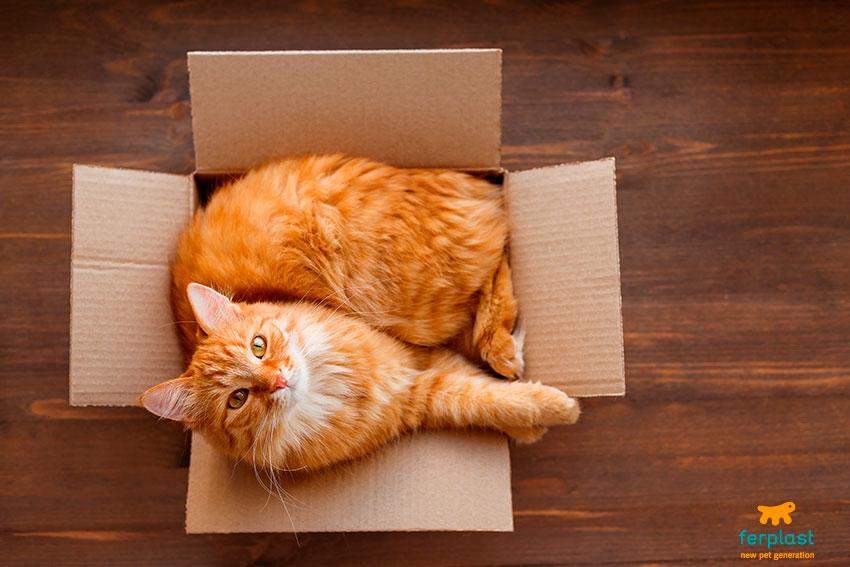 gatti e scatole