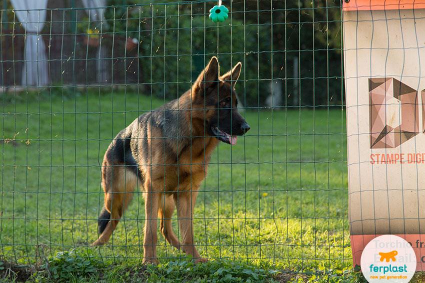 allevamento cane pastore tedesco vicenza