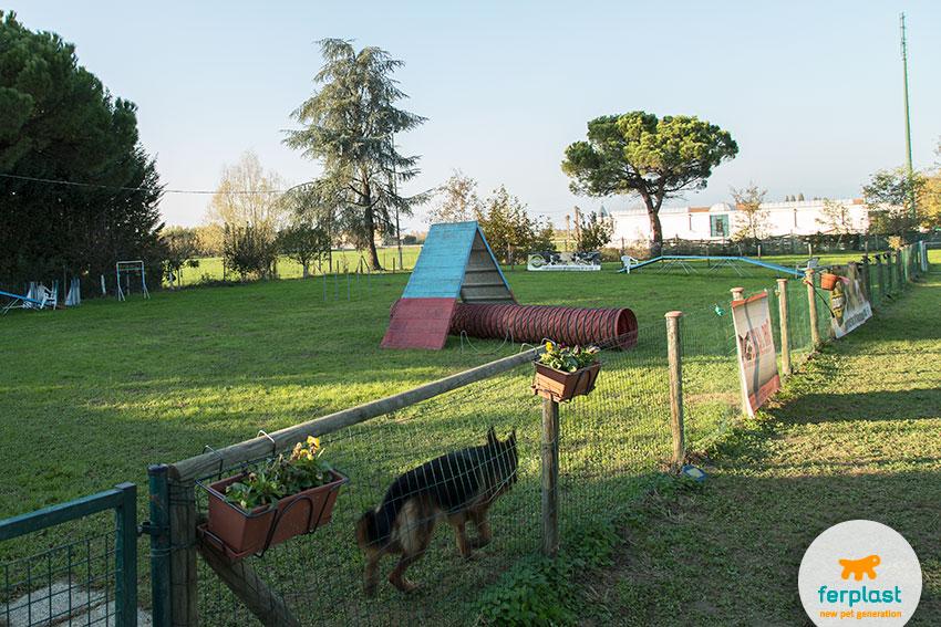 centro addestramento dog agility von casa falco quinto vicentino