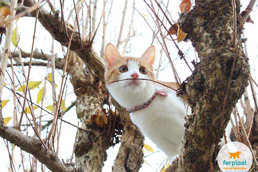 gatto_rosso_gioca_alberi