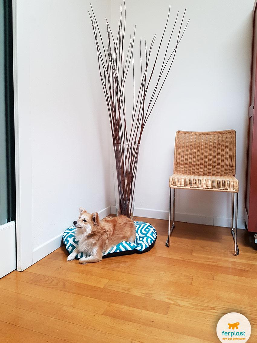 Arredare il salotto in stile classico moderno love ferplast for Best home decor blogs 2016