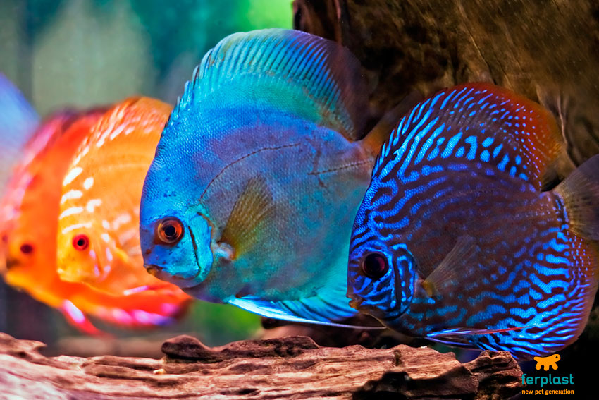 neon-o-led-tubi-fluorescenti-acquario