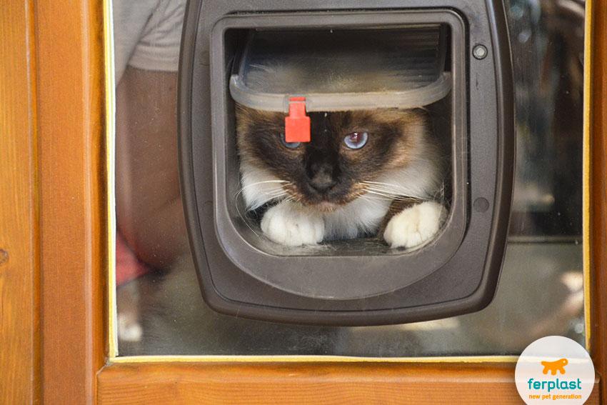 portina per gatti installata su una finestra