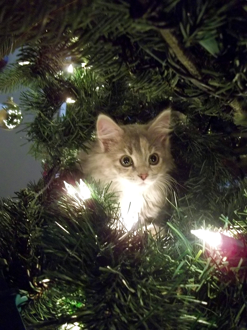 Christmas Decorations For Cat Lovers Love Ferplast