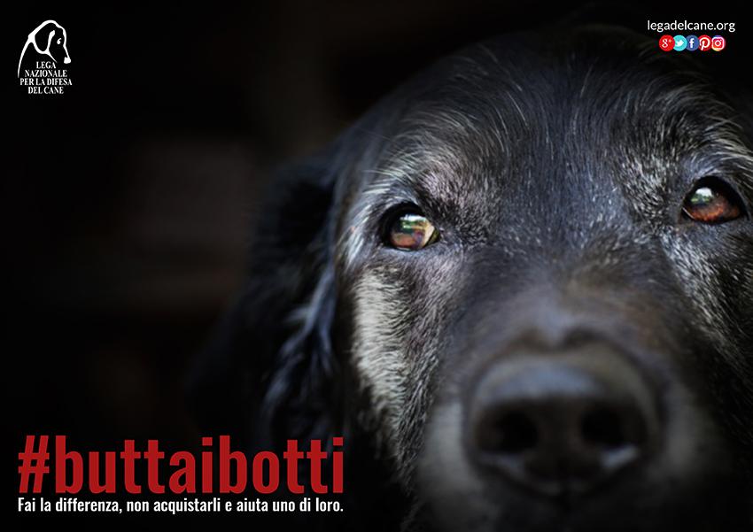 buttaibotti-2016-cane