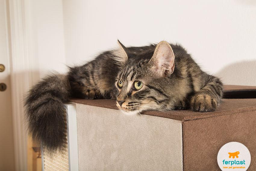 Il gatto in inverno e la casa dei sogni love ferplast for Il gatto inverno