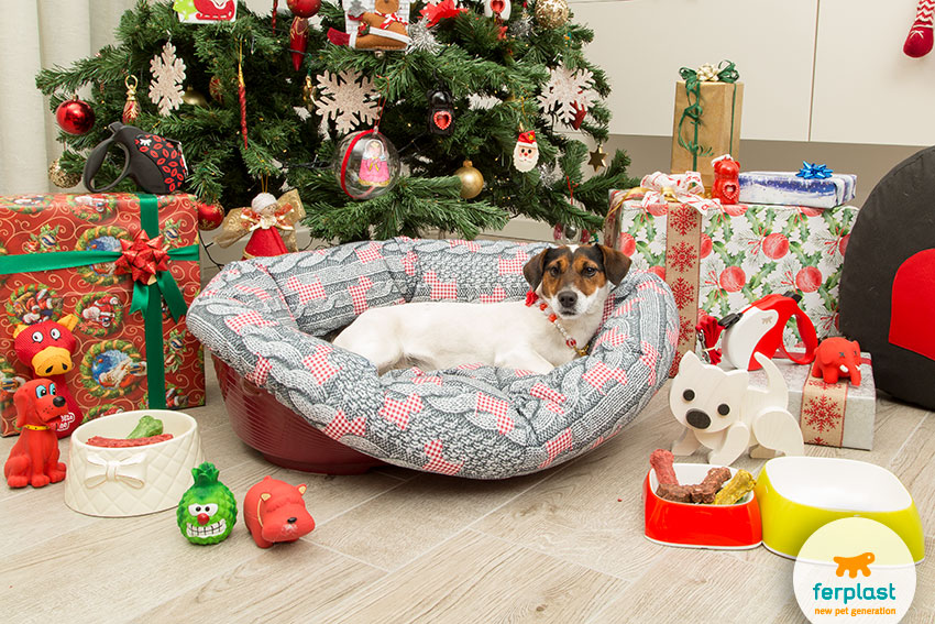 Great ideas for Christmas gifts for the dog - LOVE FERPLAST
