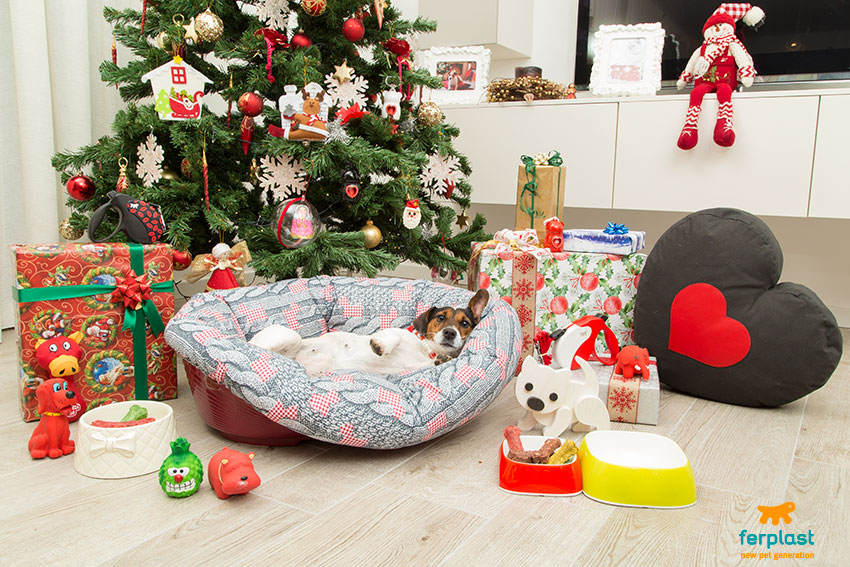 regali-per-cani-a-natale-cuccia