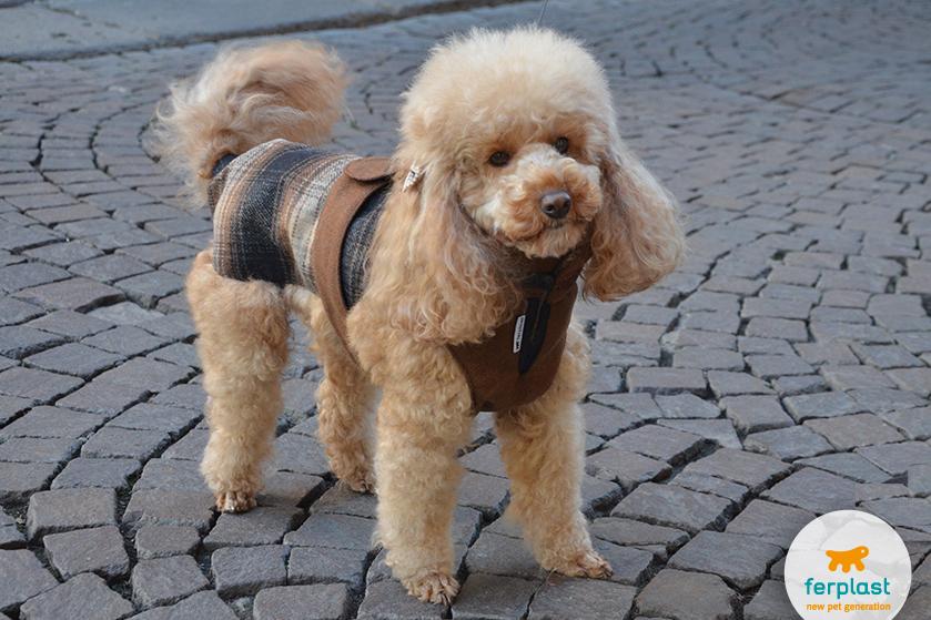 Misurare il cane per acquistare un cappottino love ferplast for Carattere barboncino