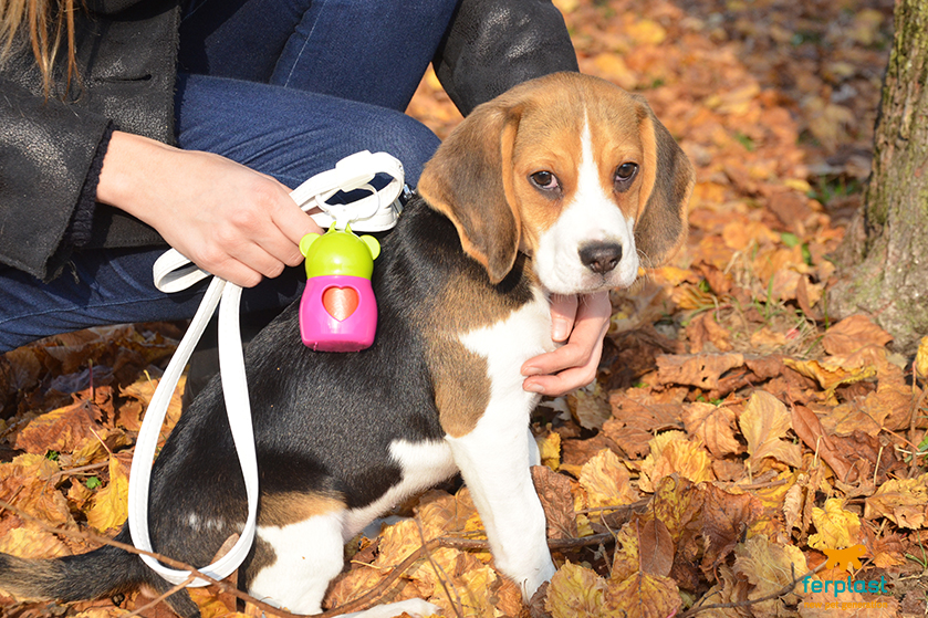 beagle_cane_bambini_carattere_giochi
