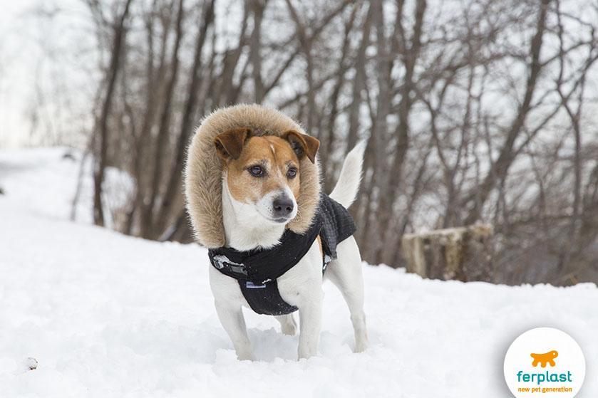 cane_freddo_modo_di_dire