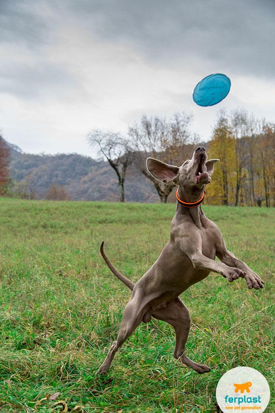 disc dog come iniziare il gioco del frisbee con il cane