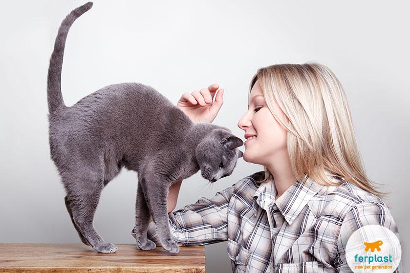 gatto_felice_coda_alta