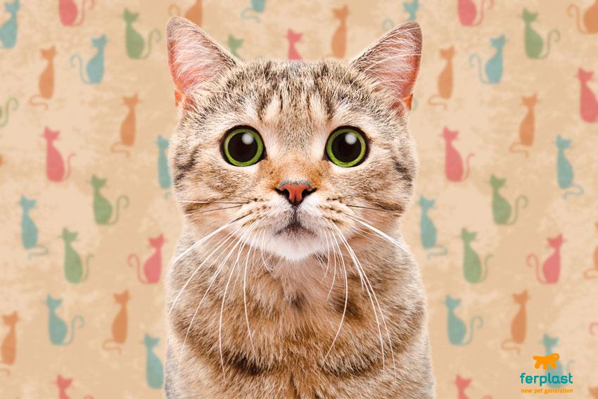 il gatto fa la pipì in giro per casa