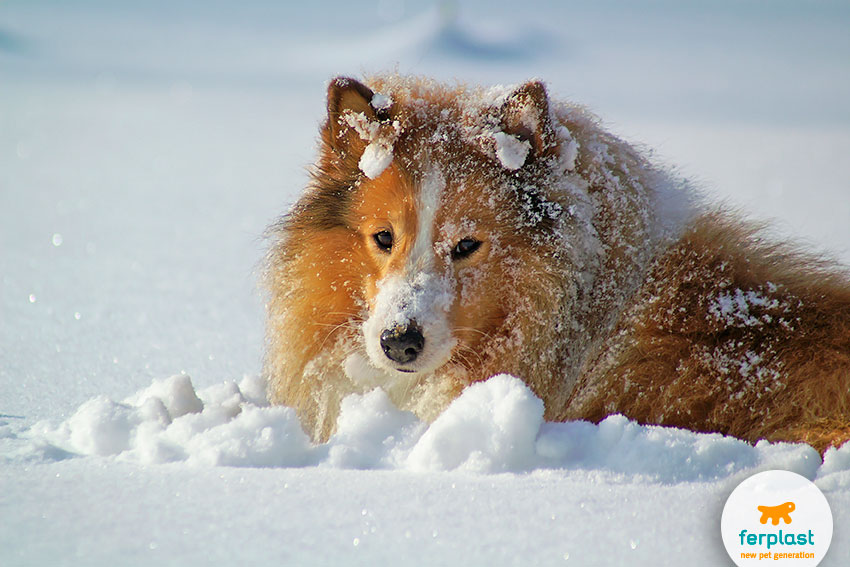 cane che gioca in mezzo alla neve