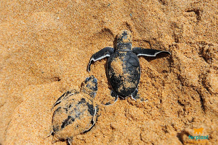Riproduzione delle tartarughe d 39 acqua love ferplast for Tartarughiera acqua