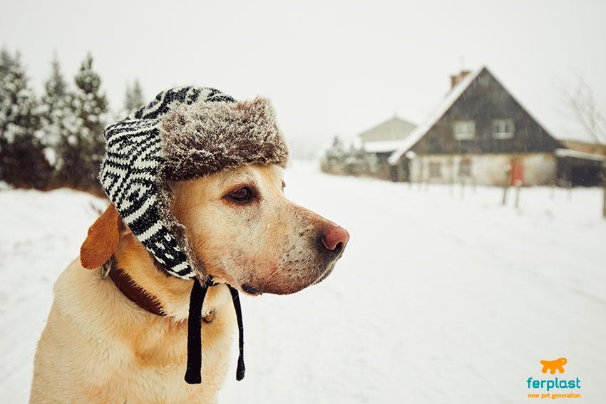 perché si dice fa un freddo cane