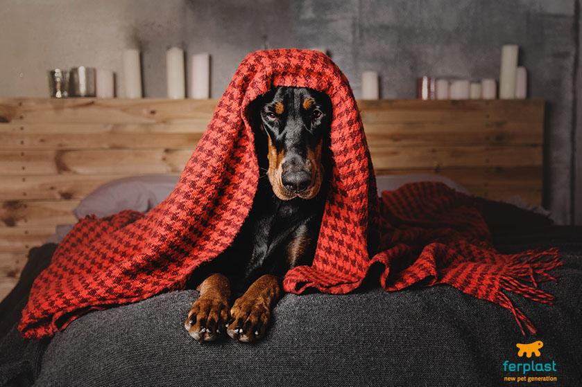 razze_canine_freddolose_motivo