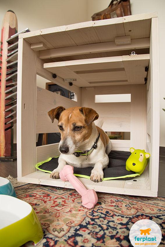 jack russell in una cuccia da interni per cani