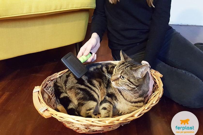 gatto_cura_pelo