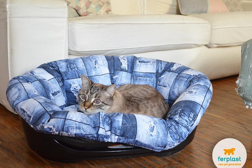 gatto_siesta_deluxe