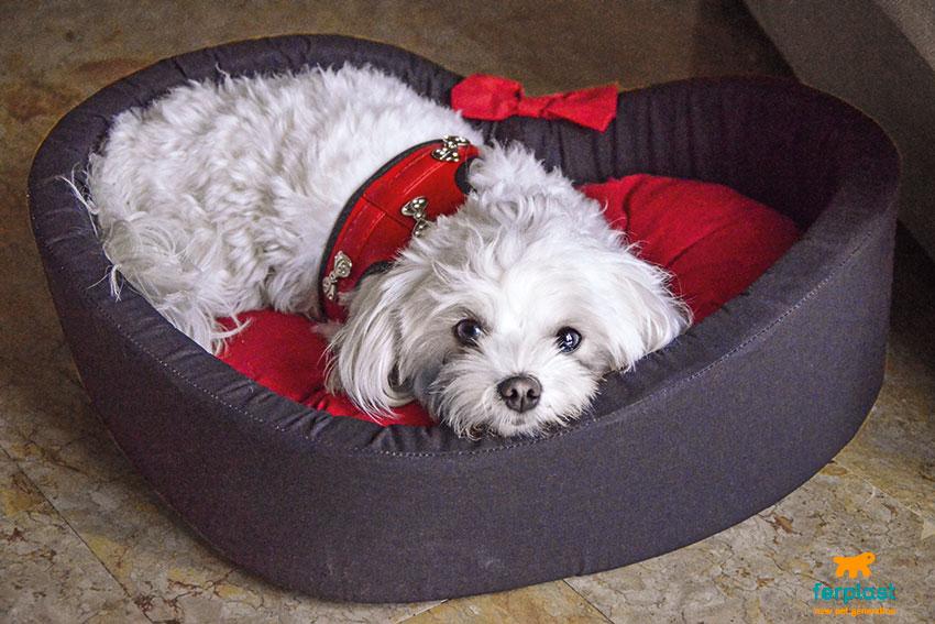regali di san valentino per cani