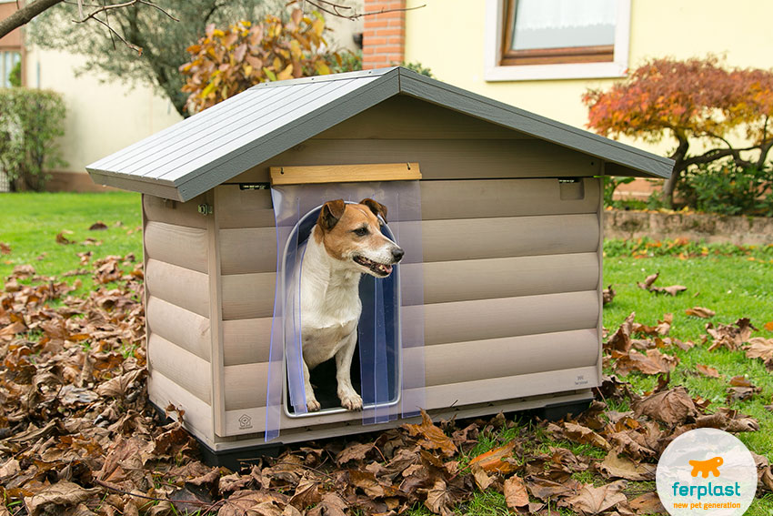 jack russell dog inside a wooden dog house