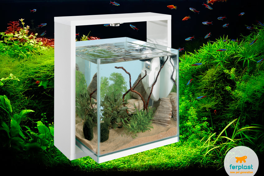 Zen aquarium love ferplast for Decoration zen aquarium