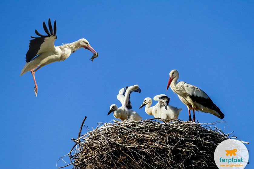 Gli uccelli migratori che arrivano in primavera love - Primavera uccelli primavera colorazione pagine ...