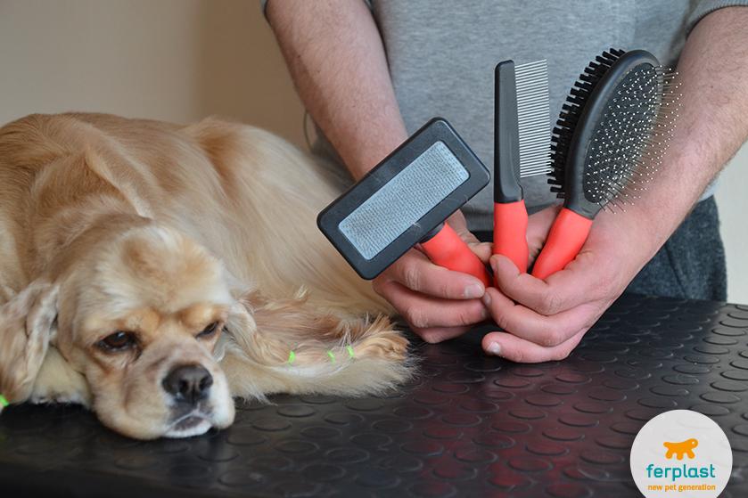 Come preparare un prodotto naturale per pulire il pelo del ...