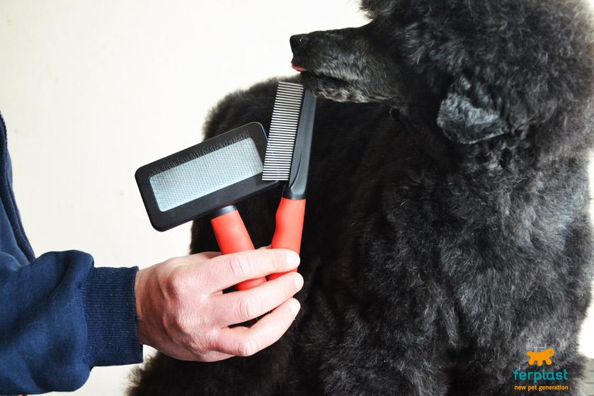 comprare-spazzole-spazzolare-cane-barbone-barboncino