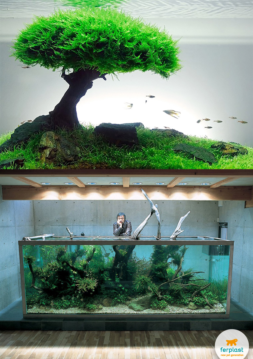 Zen aquarium love ferplast for Zen fish tank