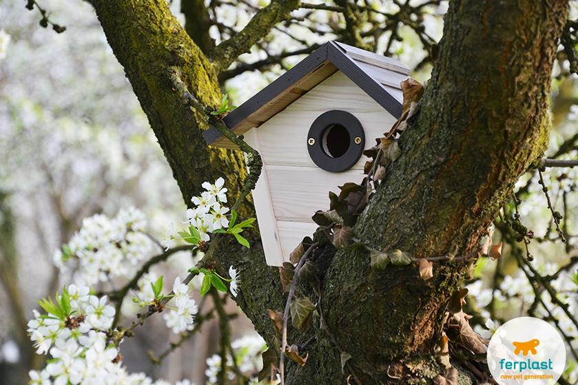 uccelli_migratori_primavera