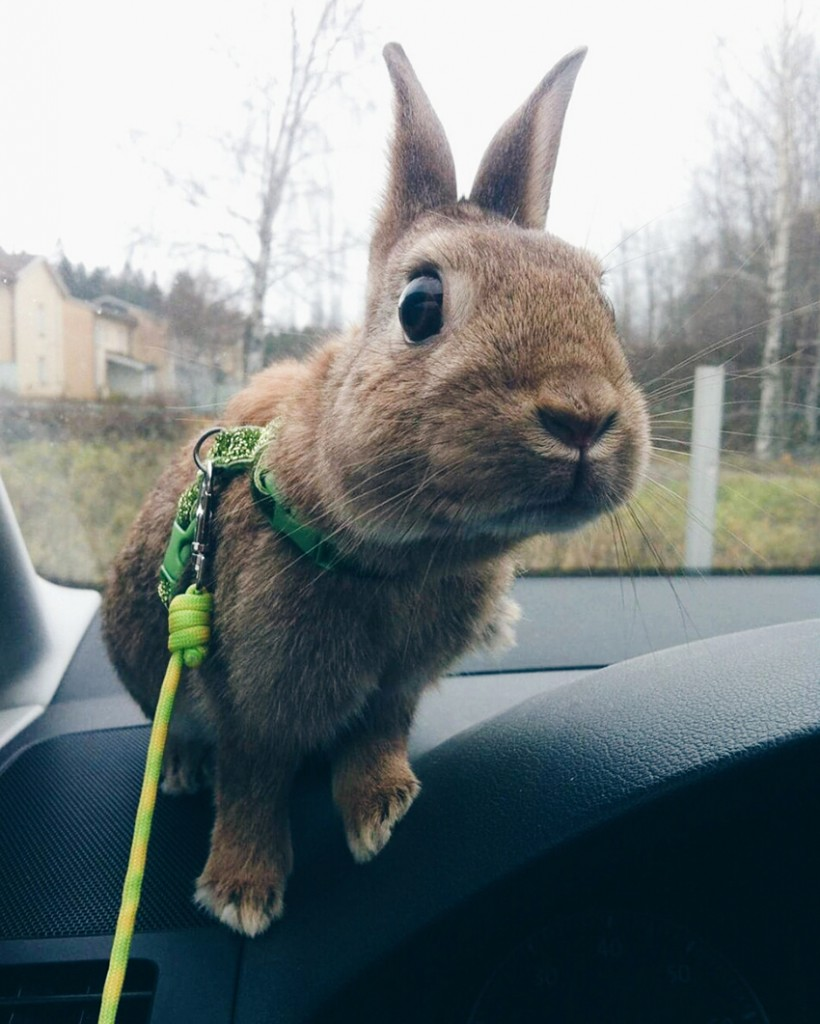 @rabbits_shetlandpony