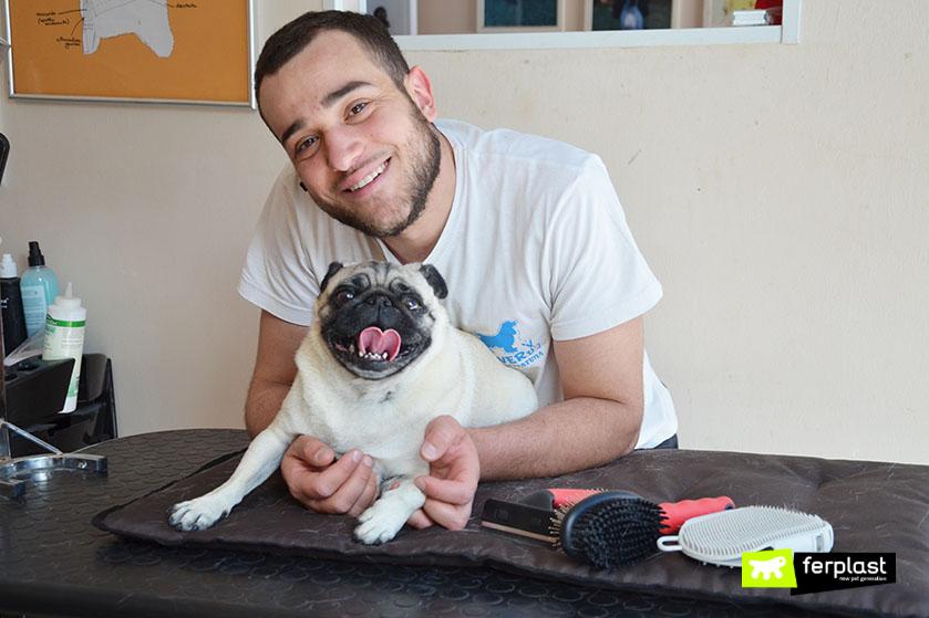 centro_tolettatura_cornedo_vicentino_silver_dog