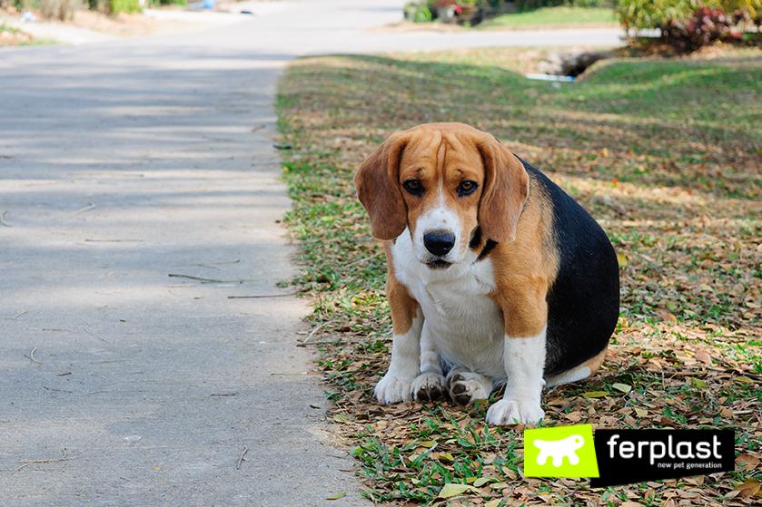 Ferplast_conselho_prevenção_da_obesidade_cão_terceira_idade